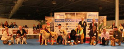 Lote de Cria Breeders class Alicante December 2013